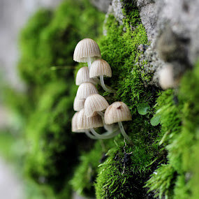 Us by Maha Khan - Nature Up Close Mushrooms & Fungi ( wild, macro, fungi, nature, mushrooms )