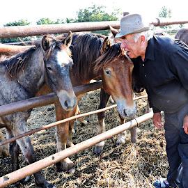 Give me a kiss. by Şerban Adriana - Animals Horses