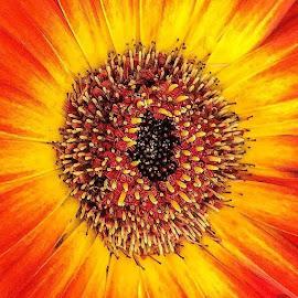 by Judy Friedman - Nature Up Close Gardens & Produce