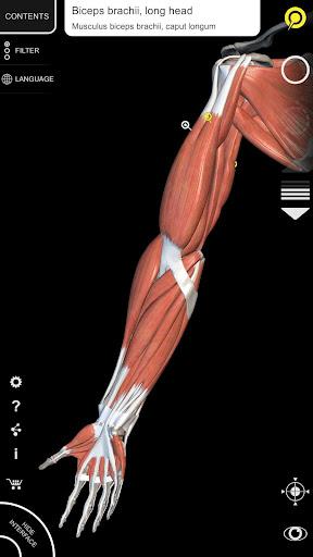 Muscular System - 3D Anatomy - screenshot