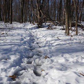 Footprints in the Snow by Kathy Kehl - Landscapes Travel ( forests, footprints, foot, snow, forest, woods )