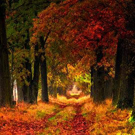 *** by Stanley P. - City,  Street & Park  City Parks ( park, autumn, landscape, citi )