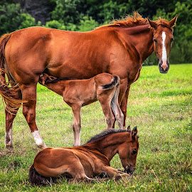 by Ron Meyers - Animals Horses