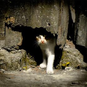 Kittynapper.jpg
