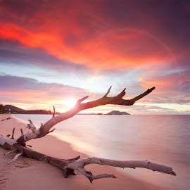 Wood Shine by Fransiskus Chai - Landscapes Sunsets & Sunrises ( beaches, indonesia, sunsets, sunset, asia, landscaping, landscape photography, beach, landscapes, landscape )