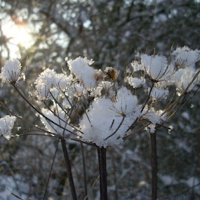 Snow by Beth Alexander - Landscapes Weather