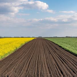 by Milos Vasic - Landscapes Prairies, Meadows & Fields (  )