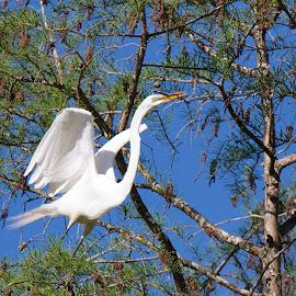 Got it! by Zeralda La Grange - Digital Art Animals ( #bird, #heron, #animal, #spring, #nesting )