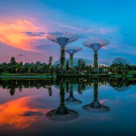 Garden by the Bay by Gordon Koh - City,  Street & Park  City Parks ( natural light, reflection, park, sunset, gardens by the bay )