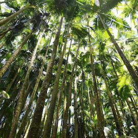 Big Island Botanical Gardens by Beth Bowman - Nature Up Close Trees & Bushes
