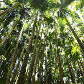 Big Island Botanical Gardens by Beth Bowman - Nature Up Close Trees & Bushes (  )