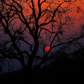 The Red Circle by Nayan Shaurya - Nature Up Close Trees & Bushes ( #sun, #landscape, #evening, #sunsets, forests, #red )