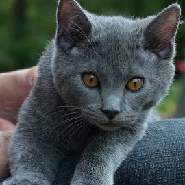 Inox by Serge Ostrogradsky - Animals - Cats Kittens