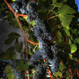 Wine Country by Todd Klingler - Nature Up Close Gardens & Produce