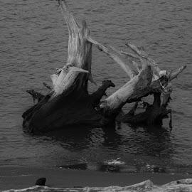 by Rae Ann - Landscapes Beaches