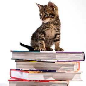 by Paolo Tangari - Animals - Cats Kittens ( cats, books, kitten, pets )