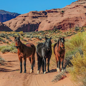 by Terry DeMay - Animals Horses (  )
