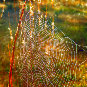 Waiting on the Rain by Jeannie Love - Nature Up Close Webs ( field, autum, nature, nature up close, landscape )