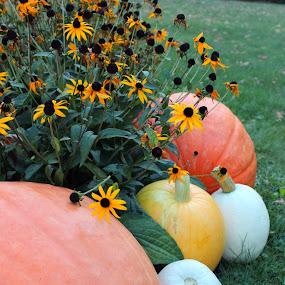 Pumpkins & Black Eyed Susans by Amanda Saxton-Jenson - Uncategorized All Uncategorized (  )