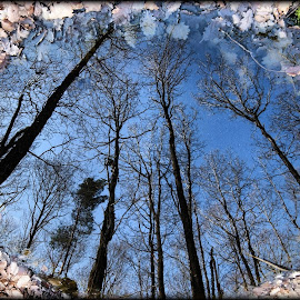 Water Reflect  by Pat Oche - Landscapes Forests ( water reflection, forest, reflect )