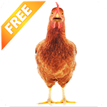 Real Talking Chicken Icon