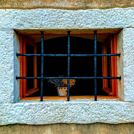 Old Window by Igor Modric - Instagram & Mobile Android