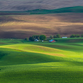 Palouse by Shalabh Sharma - Landscapes Prairies, Meadows & Fields