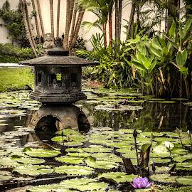 Balinese Pond by Alaa Halabi Hakim - Landscapes Travel