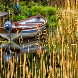 Through the weeds by Carol Ward - Transportation Boats ( ireland, lake, weeds, transportation, boat )