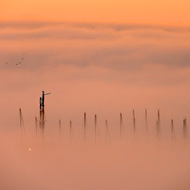 by Campbell McCubbin - Landscapes Weather ( sailboats, fog, cloud, sunrise )