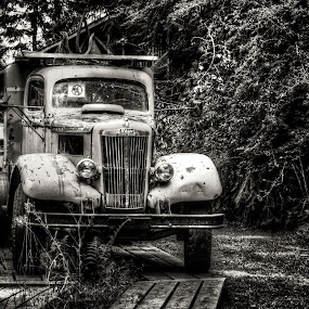 Forestry Truck by Carrie Cole - Transportation Automobiles ( black and white, truck, vintage, forestry museum, classic )