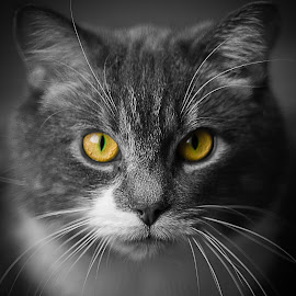 by Annie Doucet - Animals - Cats Portraits