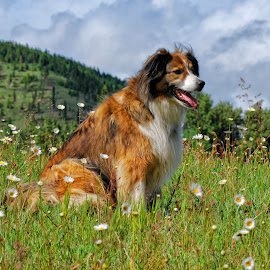 Dog Days of Summer by Twin Wranglers Baker - Animals - Dogs Portraits (  )