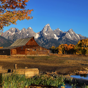 Morning View of Moulton Barn by Al Juniarsam  - Landscapes Mountains & Hills ( mormon barn, fall foliage, mormon row, moulton barn, grand teton national park )
