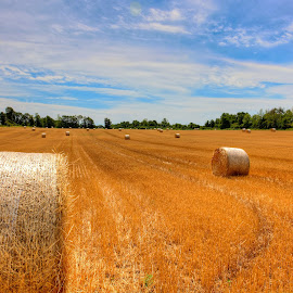 Second Cut #4 by Cal Brown - Landscapes Prairies, Meadows & Fields ( farm, field, bale, straw, august, new york, landscape )