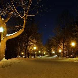 Path of tranquility by Mario Monast - City,  Street & Park  City Parks ( pathway, night scene, night lights, nightscape, lights, city parks, nature, night photography, nighttime, path, trees, night, night shot )