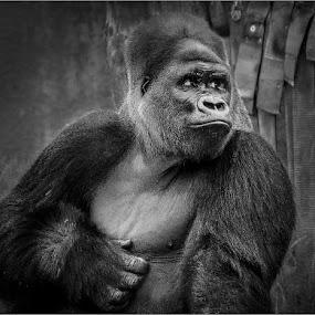 untitled by Dragan Milovanovic - Black & White Animals