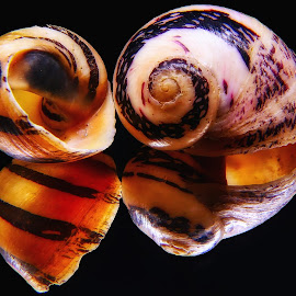 Snail Shells by Dave Walters - Nature Up Close Other Natural Objects ( macro, snail shells, nature, colors, lumix fz2500 )