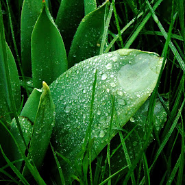 IN GREEN STYLE by Wojtylak Maria - Nature Up Close Leaves & Grasses ( green, plants, waterdrops, leaves, garden )
