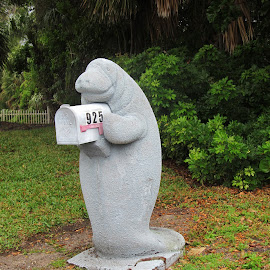 Manatee Mailbox in Vero Beach by Christine B. - Buildings & Architecture Statues & Monuments ( manatee, florida, funny, vero beach, mailbox )