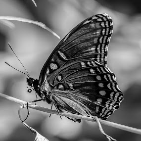 by Forrest Covin - Black & White Macro (  )
