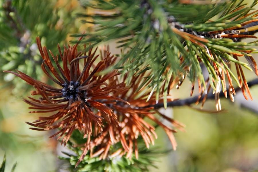 Parc Naziunal Svizzer, Graubünden, Switzerland by Serguei Ouklonski - Nature Up Close Trees & Bushes ( close up, alps, outdoors, europe, conifer, summer )