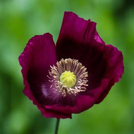by Barbara Horner - Flowers Single Flower