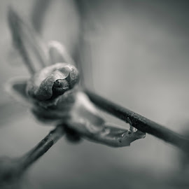 Blossoms by Yann Marchelan - Flowers Tree Blossoms ( macro photography, black and white, flower )