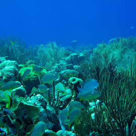 Los Roques - Venezuela by Lucas Mendonca - Landscapes Underwater ( snorkell, coral, blue, underwater, ocean )