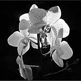 by Fred Starkey - Black & White Flowers & Plants (  )