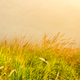 The Tares by Kriswanto Ginting's - Nature Up Close Other Natural Objects ( grass, nikon d, yellow, sunlight, nikon )