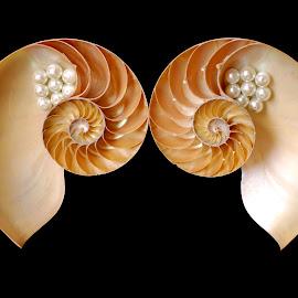 fibonacci by Adjie Tjokrosoedarmo - Artistic Objects Still Life ( sea, nautilus, beach, seashells, fibonacci )