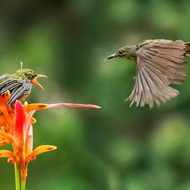 by MazLoy Husada - Animals Birds