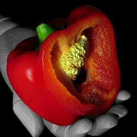 RED PEPPER #2 by Karen Tucker - Food & Drink Fruits & Vegetables ( arty, red, wooden hand, artists hand, still life, food, art, capsicum, sweet pepper, bell pepper, pepper, vegetable )